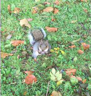 Chance encounter with a Squirrel