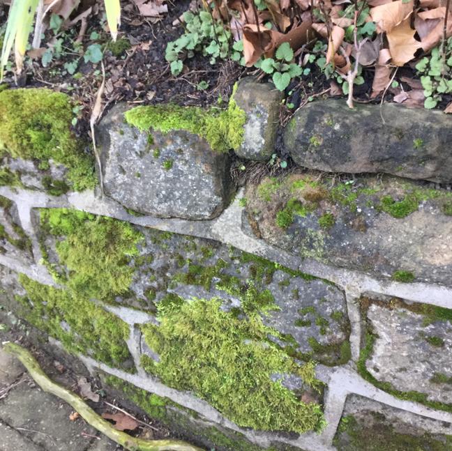 Volunteer Perspective (ardwick art walk I)