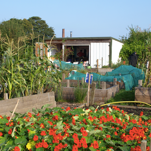 Allotments for All!