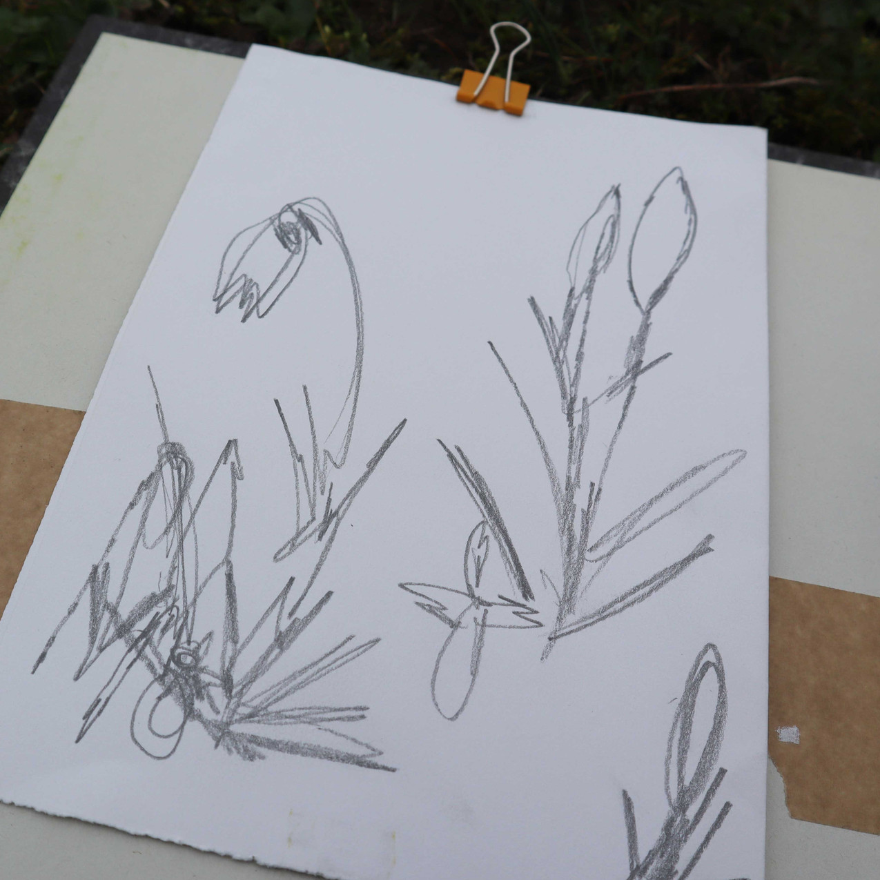 luisha-draw-web