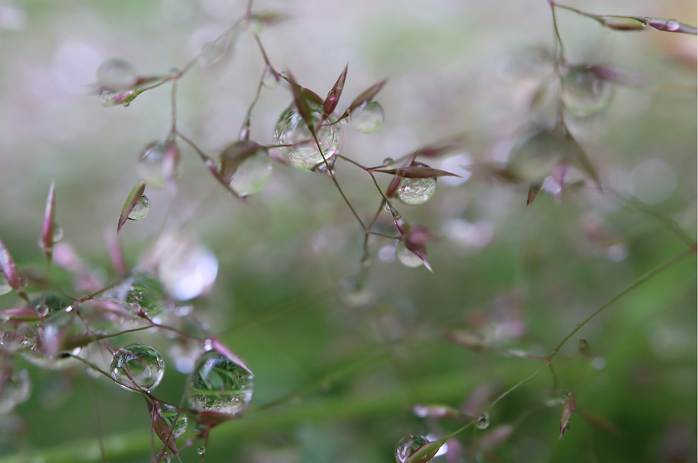 Early Morning Dew + Rain #1  30/6/20