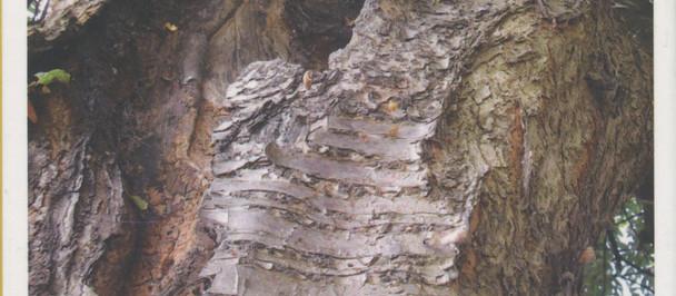 #treestory meets #breathingspaces (5) in TLC Archive