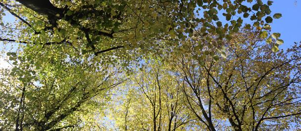 Birchfield Boulevard Autumn Colours