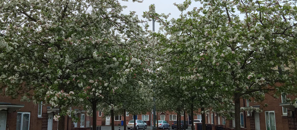 Blossoms in Ardwick