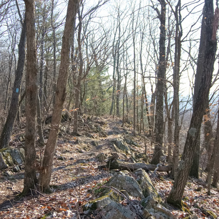 NET Section Hike Pictures