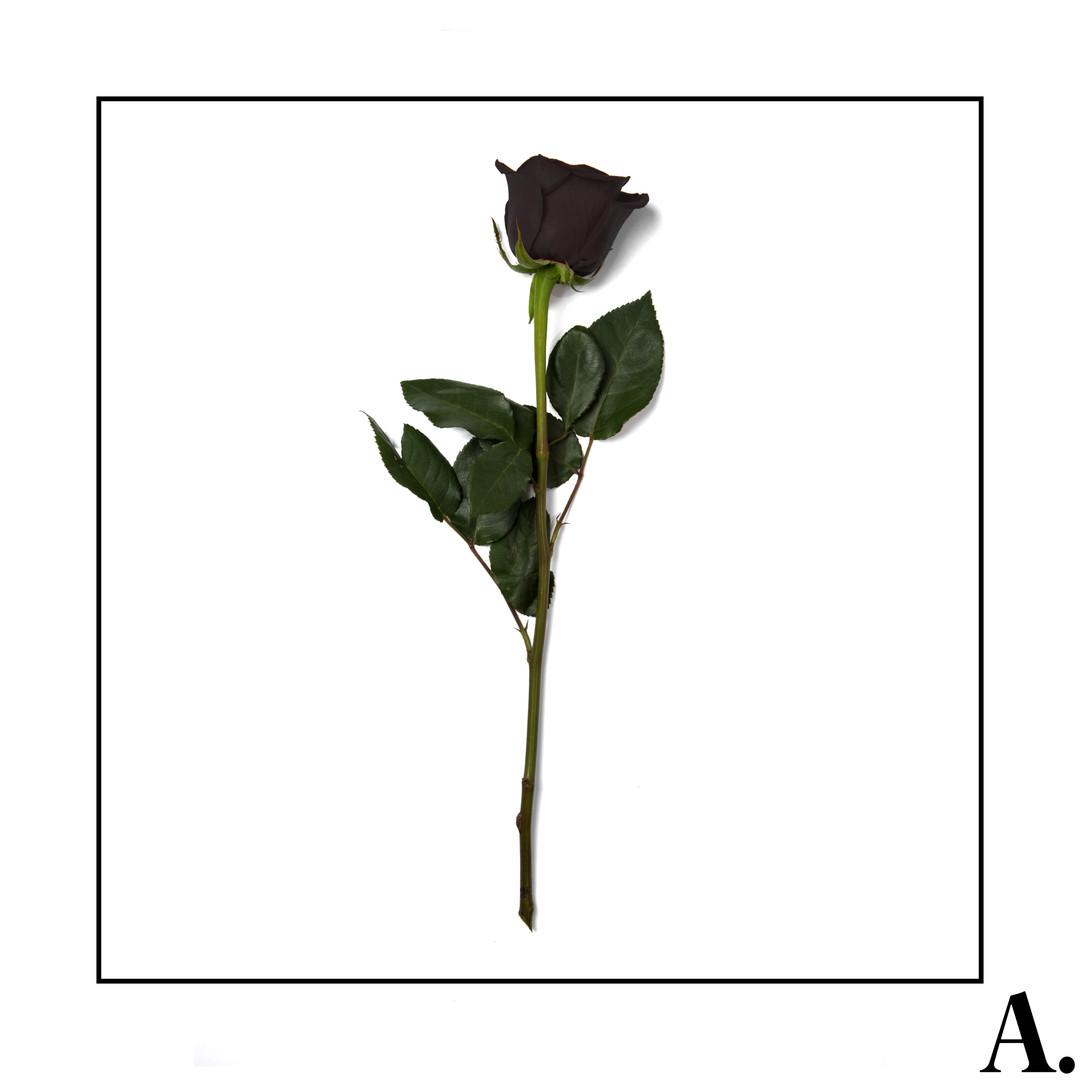 Amorie Volume One cover.jpg