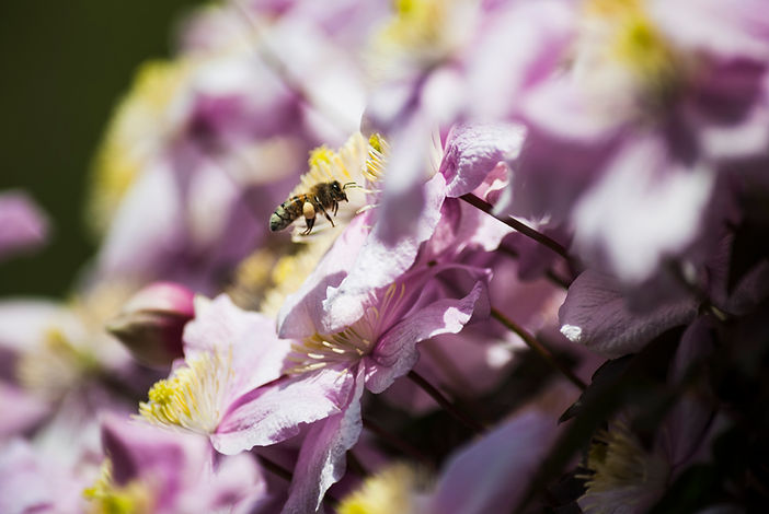 honey bee meds.jpg