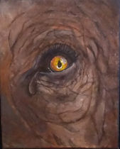 Elephant Eye With Tear.jpg