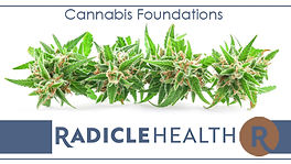 Radicle HealtCannabis Foundations Course