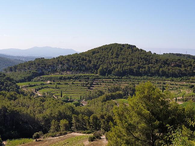 Bandol wijngaarden.jpg