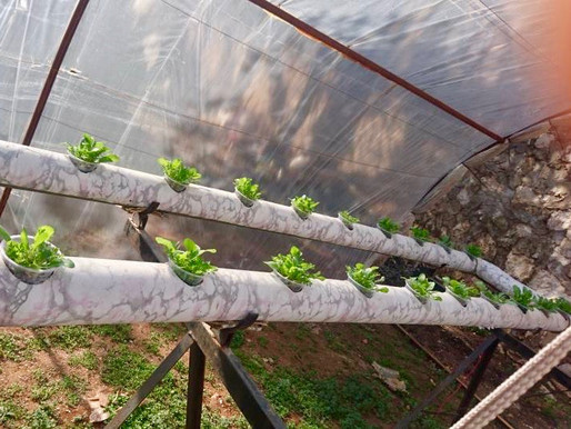 Update on Hydroponics in Syria