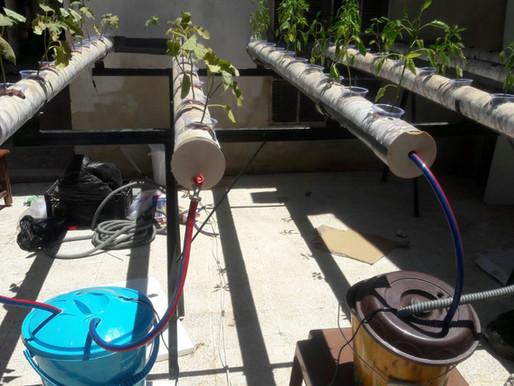 Hydroponic Farming in Syria
