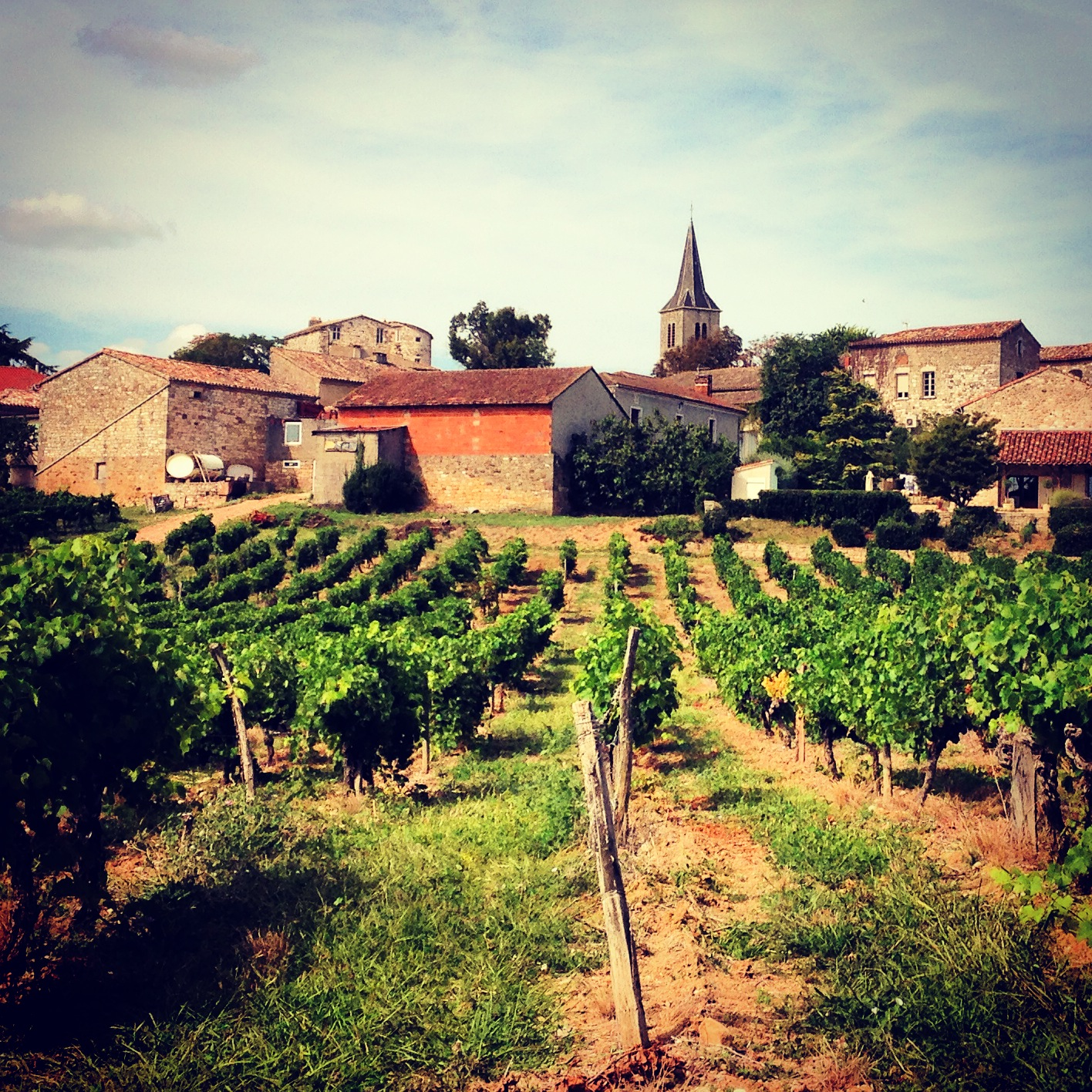 Gaillac wines
