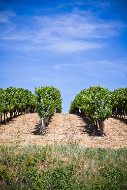 Gaillac wines and vineyards