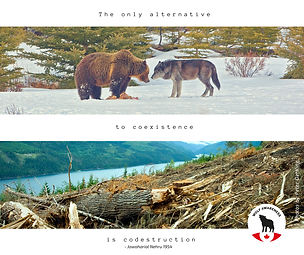 Wolf Awareness Meme - The only altenative to coexistence is codestruction