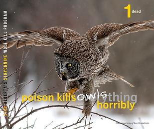 1 Great Gray Owl_Ann Brokelman.png