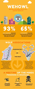 Wehowl infographic showing research results from the BC wolf kill survey. Skyscraper, wolf icon, wolf word cloud, caribour wordcloud, helicopter icon, neck snare icon, poison icon