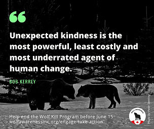 Wolf Awareness Meme - Unexpected kindness is the most powerful, least costly and most underrated agent of human change
