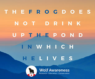 Wolf Awareness Meme - The Frog does not drink up the pond in which he lives