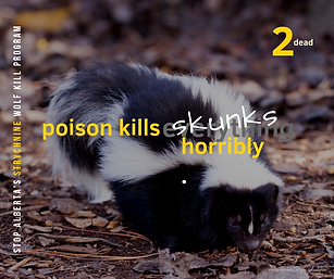 2 Skunks.png