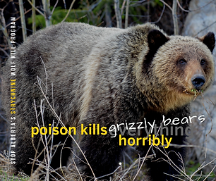 Grizzly2-Wendy Chambers.png