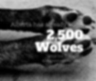2500 Wolves_Alberta Wolf Kill.jpg