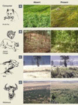 Wolves-help-trees.jpg