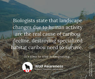 Wolf Awareness Meme - human activity is the real cause of caribou decline