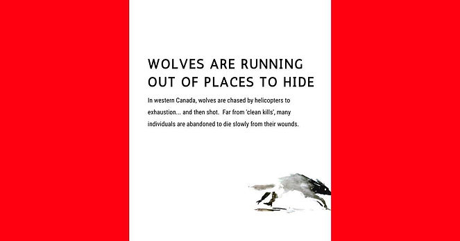 Wolves-hiding-in-Canada-flag.jpg