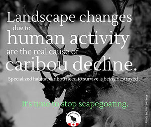 Wolf Awareness Meme - Lanscape changes due to human activity are the real cause of caribou decline