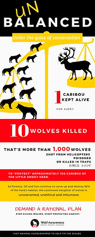 Infographic showing the numbe of wolves killed to protect 1 caribou