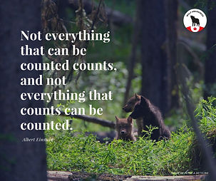 Wolf Awareness Meme - Not everything that can be counted counts, and not everything that counts can be counted