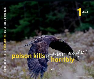 1 Golden Eagle.png
