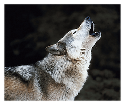 Wolf-Howling.png