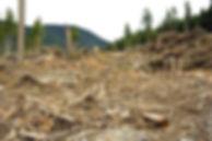 Habitat-Loss.jpg