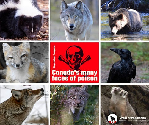 Canada's many faces of poison.jpg
