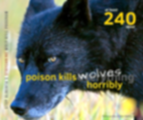 240 Wolves.png