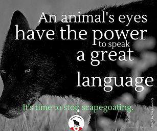 Wolf Awareness Meme - An animal's eyes have the power to spark a great language