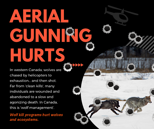 Aerial gunning_bullet holes.png