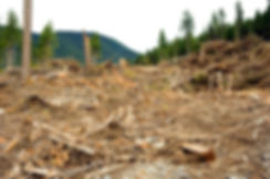 BC Clear Cut image by Peter Dettling