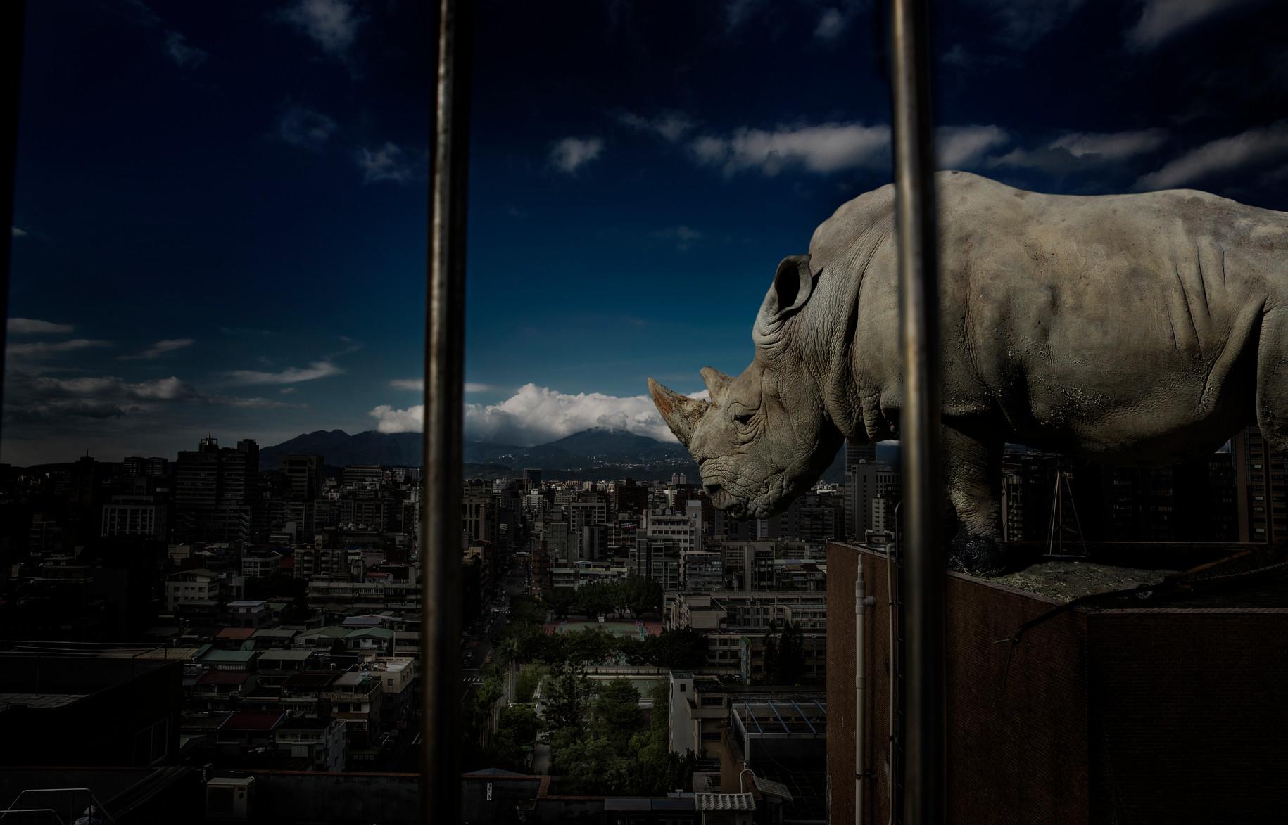 Escape rhino / 2016