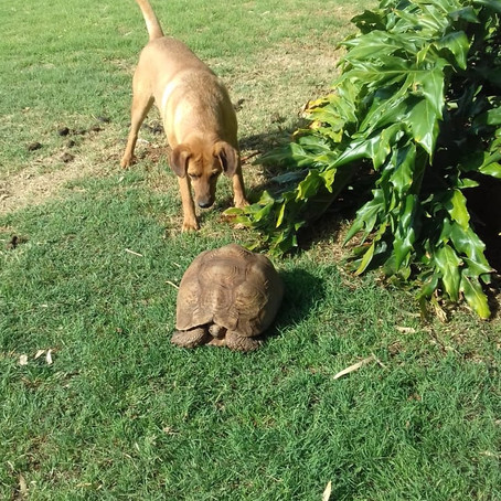 Lucky meeting the tortoise the day Graham adopted him at Askari