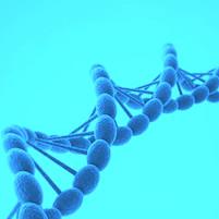 5 à 10% des cancers du sein sont liés à une altération génétique. L'Institut Français du Sein possède un circuit spécifique.