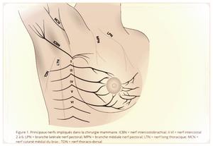Nerfs impliqués dans la douleur après une chirurgie du sein