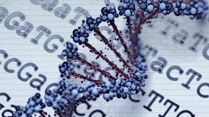 Mammorisk, polymorphisme génétique, analyse du risque de cancer du sein
