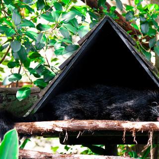 Binturong,Taronga Zoo, 08.04.2019