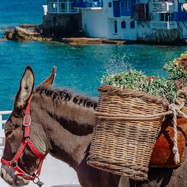 Donkey in Mykonos, Greek Islands 2018