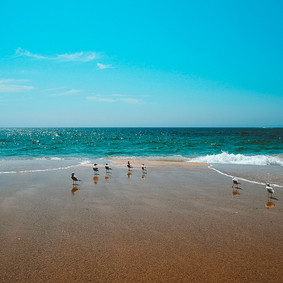 Seagulls, Coogee Beach, Sydney 2019
