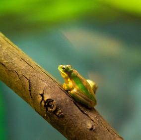 Frog,Taronga Zoo, 08.04.2019