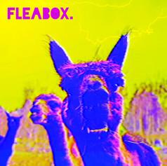Box Jellys - Anti-Social (2018)